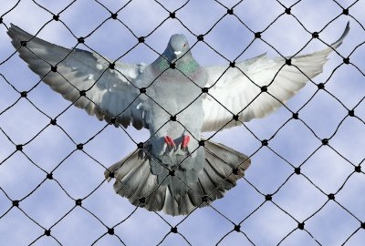 anti-bird-netting-systems