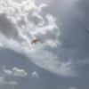 hawk-bird-scarer-terrace-roof-top-symphony