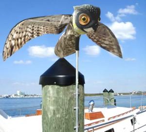 prowler-owl-dock