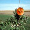 terror-eyes-balloon-agriculture