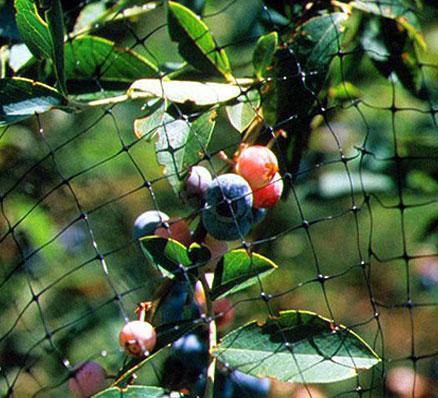 Anti Bird Netting, Bird Net India, Pigeon Control Netting
